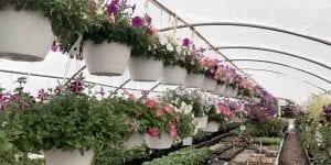 Green House Flowers